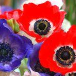 Учёные связывают изменение цвета цветов с колебаниями климата